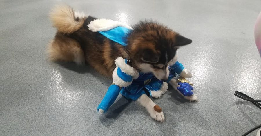 There are dogs in official Dota 2 costumes at The International 8