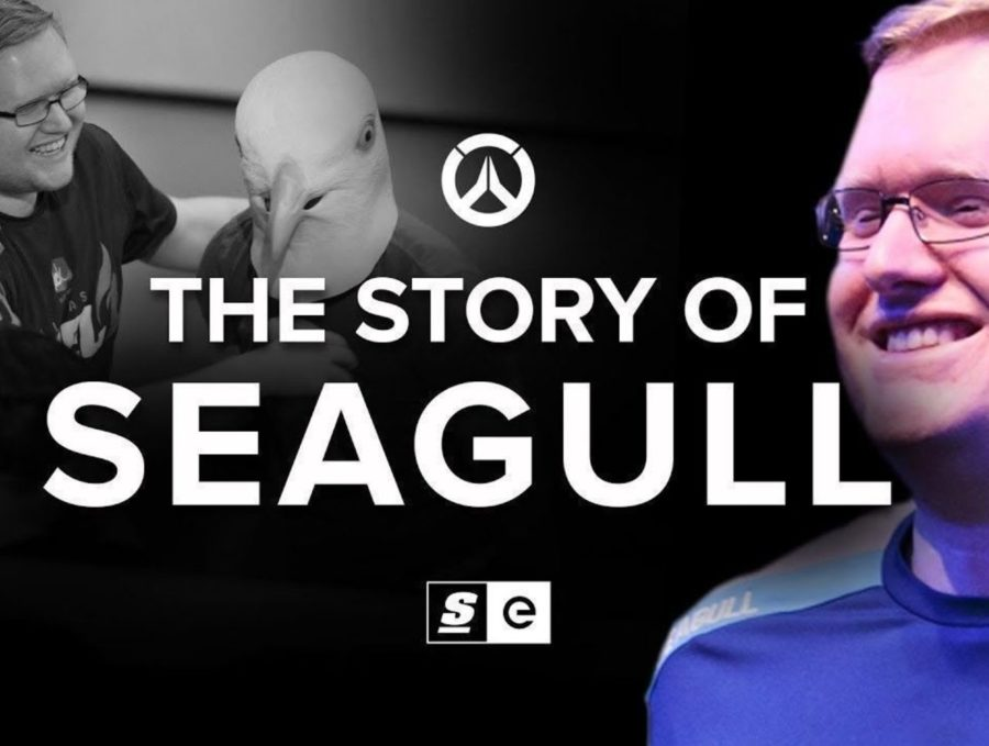 The Story of Seagull